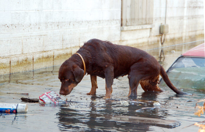 How to Help Animals During Hurricanes, other Natural Disasters.